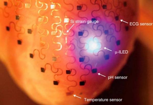 Heart-membrane-electronics-doorbin.info_.jpg